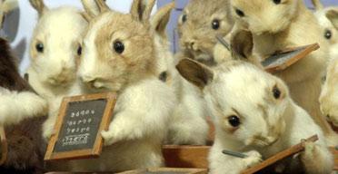 rabbits372